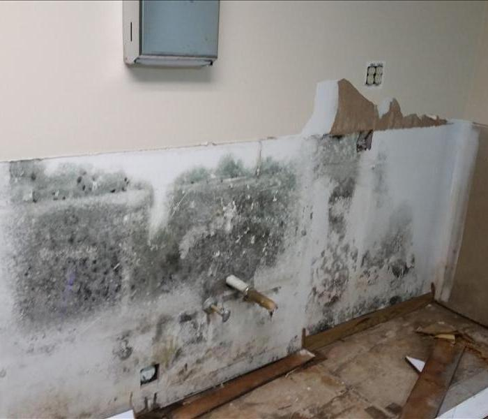 Mold Remediation Mold 101: What to Know